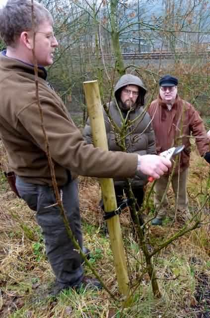 Demonstrating restorative pruning on the Course in the wild garden at Ferney Lee School