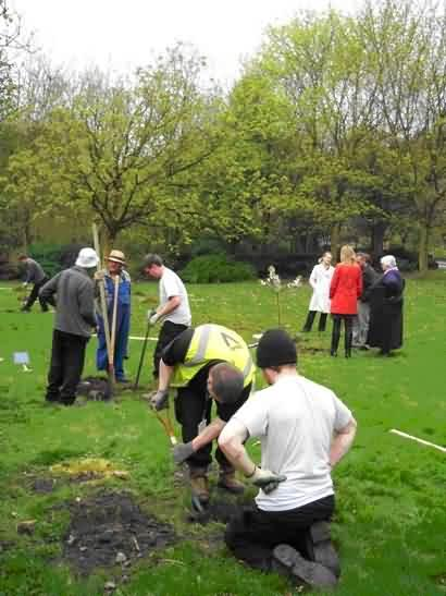 Planting new trees near Eastwood