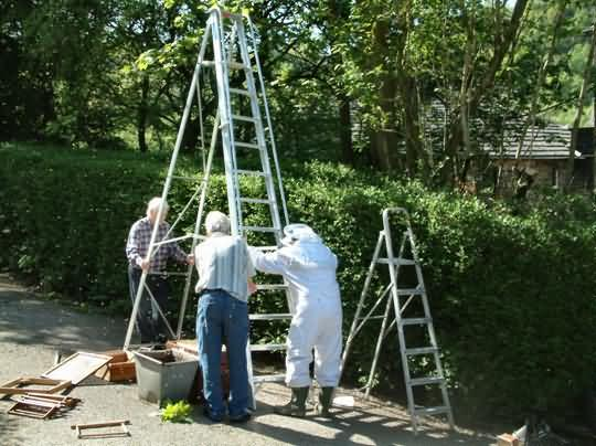 Setting up an Even Higher Ladder To Capture The Swarm