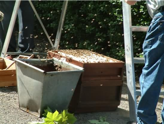 The Spare Hive Brood Box and Empty Container Under Swarm