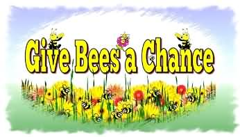 give bees a chance and flowers
