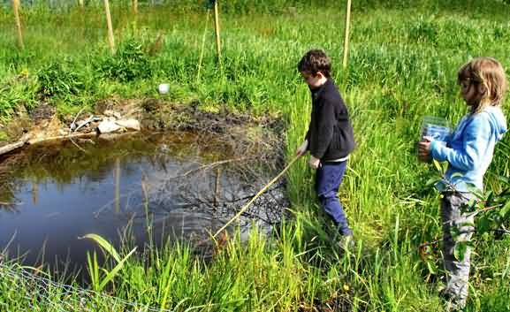 Pond dipping at Walsden