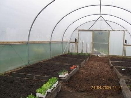 young veg ready for planting