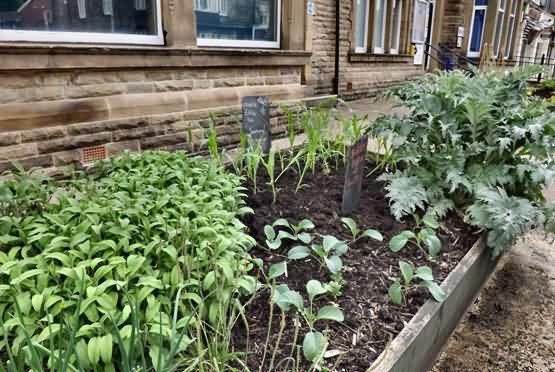 New Corn bed at the police station