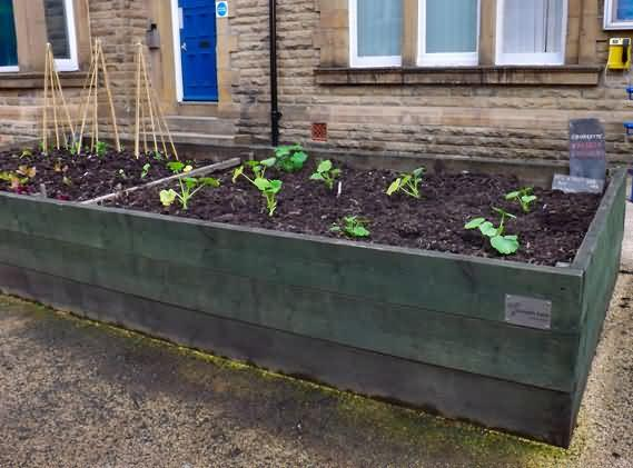 old corn bed at police station now zucchini