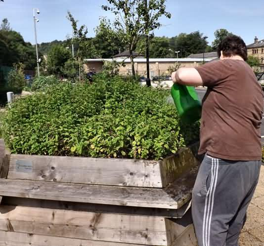 Stephen give the raised bed a good soak