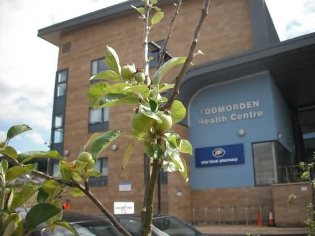apples at todmorden health centre
