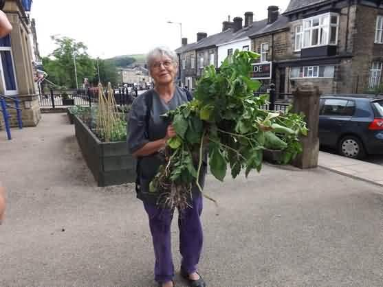 Lena helps clean up the pulled potato plants at the police station