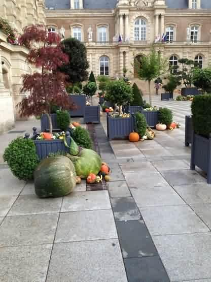 French building surrounded by arty veg