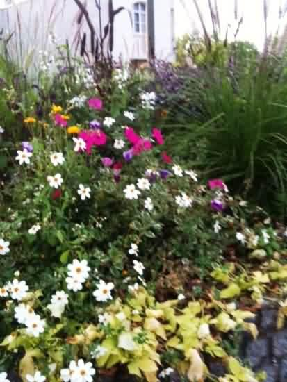 French flower planting