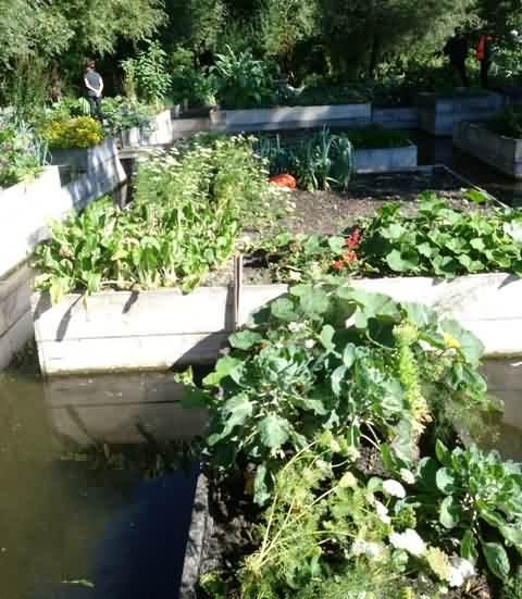 growing veg on water France