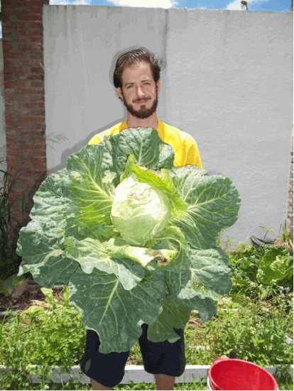 cabbages grwo huge in Argentina