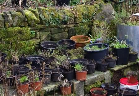 herbs divided and potted for moving
