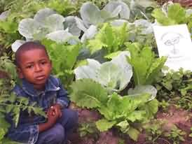 cabbage patch child