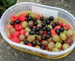 carton of mixed berries